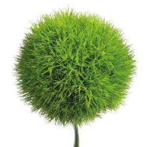 Dianthus Barbatus Verde